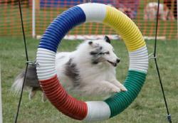 Bryce jumping