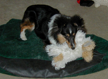 Chewing the stuffed dog toy